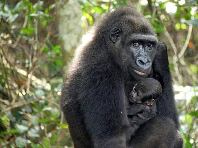 Gabon's Ivindo National Park Becomes A UNESCO world Heritage Site